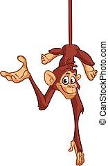 rigolote, singe, chimpanzé, bas, dessus, pendre