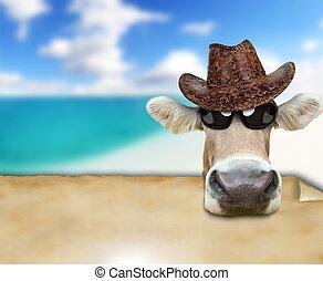 rigolote, vache