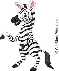 rigolote, zebra, fond blanc, dessin animé