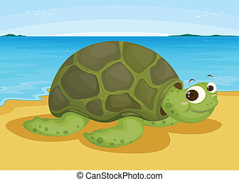 rivage, tortue, mer
