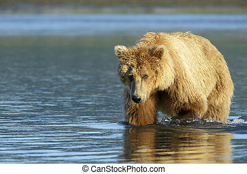 river., grizzly, peche