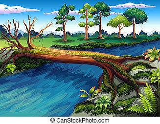 rivière, arbre, algues