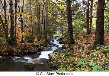 rivière, automne