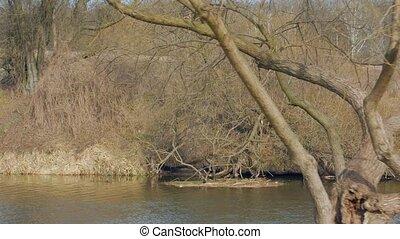 rivière, castor, nid
