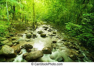 rivière, jungle