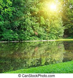 rivière, parc, été, levers de soleil