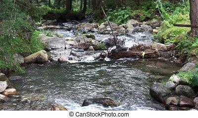 rivière, pierres, torrent, arbres.