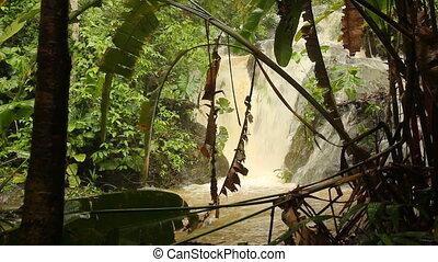 rivière, rainforest