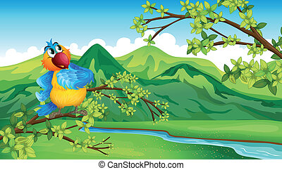 rivière, travers, perroquet