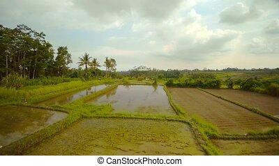 riz, bali, champs, océan, indien, 8, île