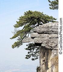 rocher, arbre, stand, énorme, droit, pin