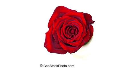 rose, blanc, chronocinématographie