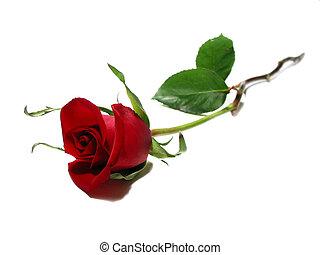 rose, blanc rouge, fond