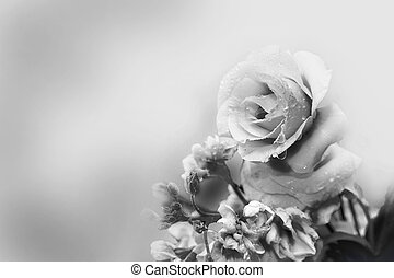 rose, blanc, spring., noir