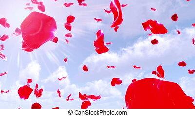 rose, ciel, pétales, 4k, (loop), tomber