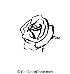 rose, croquis