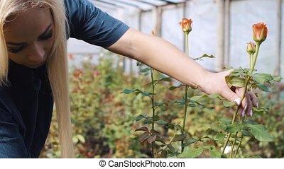 rose, découpage, femme, jardin, serre