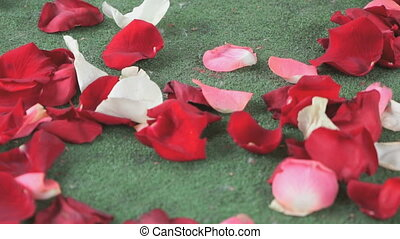 rose, dispersé, pétales, blanc vert, rouges, moquette