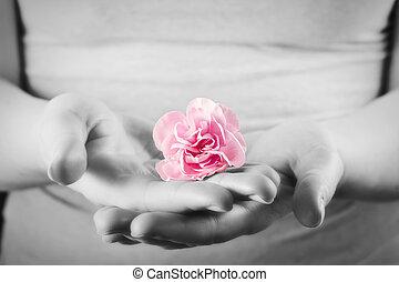 rose, femme, spa, protection, fleur, care., doux, hands.