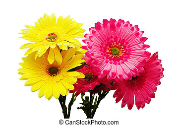 rose, fleurs blanches, isolé, jaune