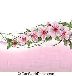 rose, fleurs ressort, fond, cerise