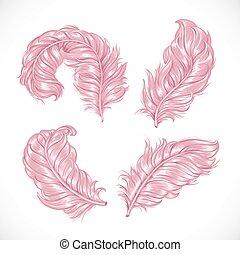 rose, luxuriant, pelucheux, plumes, isolé, autruche, grand, fond, blanc