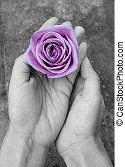 rose, mains