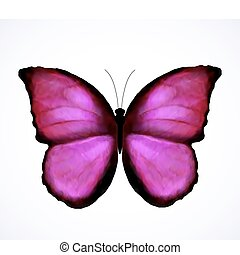 rose, papillon, clair, vecteur, isolated.