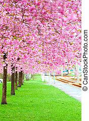 rose, printemps, floraison, (sakura, couler, arbre, herbe verte