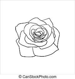 rose, sketch.