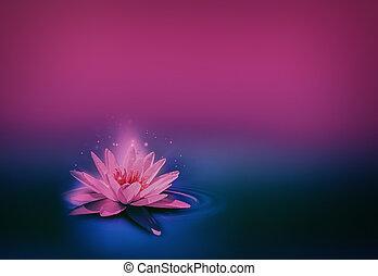 rose, sombre, surface, nénuphar