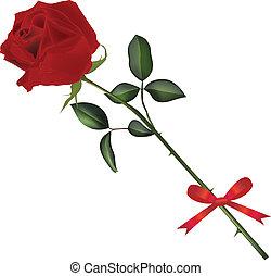 rose, tige