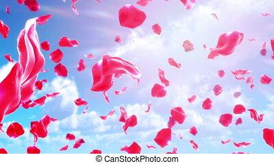rose, tomber, (loop), ciel, pétales