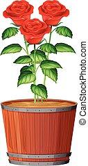 rose, usine pot