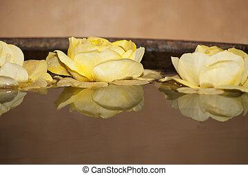 roses, étang, closeup.