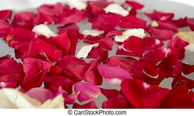 roses, blanc, automne, rouges, pétales