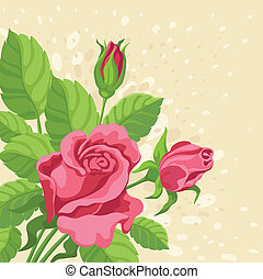 roses, fond