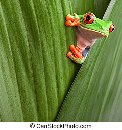 rouge a regardé, grenouille, arbre