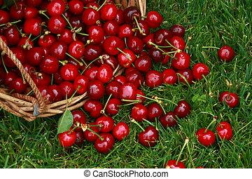 rouge vert, cerises, herbe