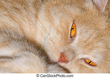 rouges, chat