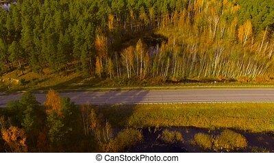 route, automne, voler, forêt, sur