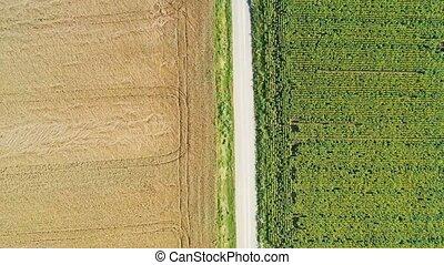 route rurale, été, bourdon, scène, levage, terre