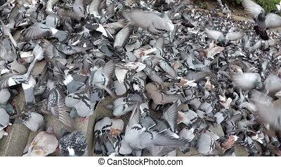 rue, manger, vue, troupeau, pain, pigeons, énorme, ville, dehors, sommet