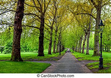 ruelle, arbres, parc