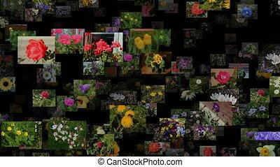ruisseau, photo, seamless, dans, en mouvement, fleurs, boucle