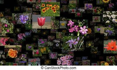 ruisseau, photo, seamless, en mouvement, gauche, fleurs, boucle