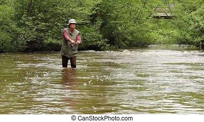 ruisseau, truite