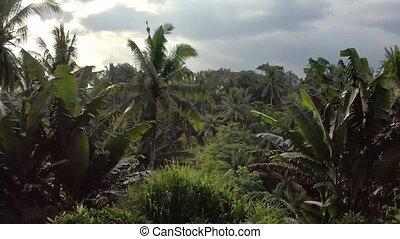 rupture, ciel, nuageux, vert, lumière soleil, fond, dehors, piscine, jungle