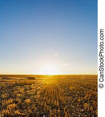 rural, coucher soleil