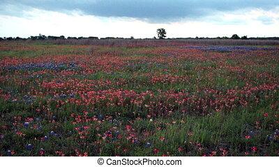 rural, wildflowers, bleu, campagne, secousse, capot, coup, texas